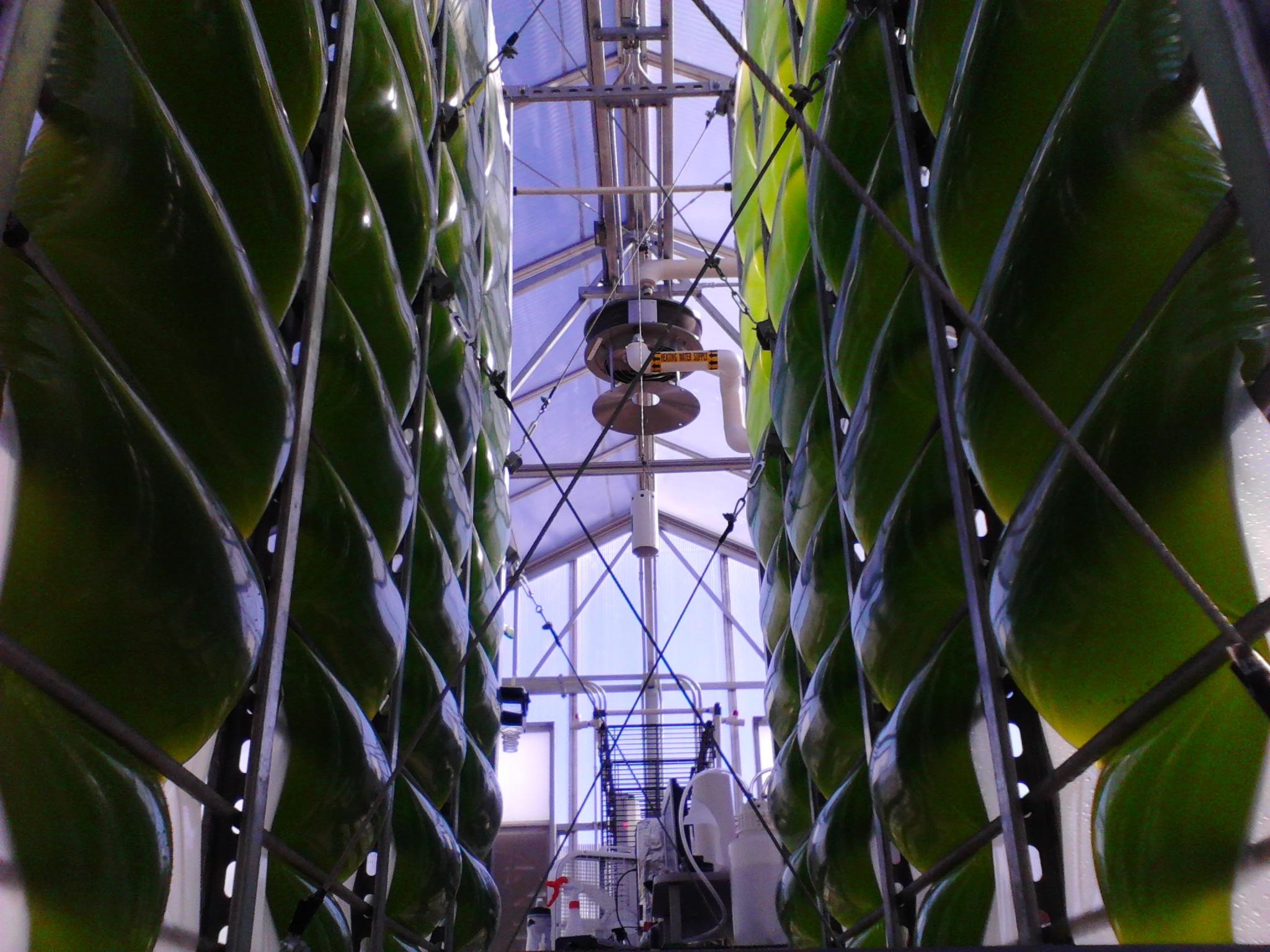 The Air-Accordion Photobioreactor
